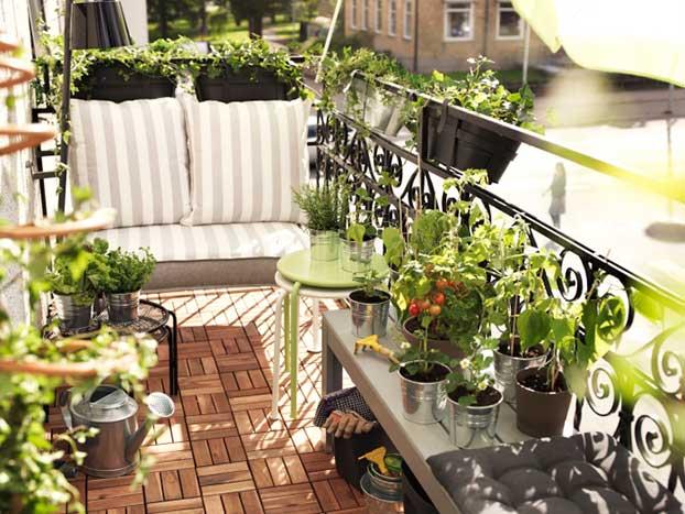 rosliny-balkonowe