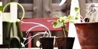 rosliny-na-polnocnym-balkonie