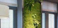zielone ściany w kuchni